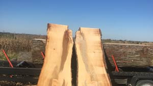 Wide Maple slabs